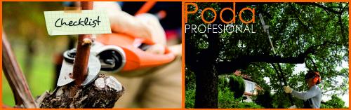 Lista de verificación: 5 consejos profesionales para podar árboles frutales.